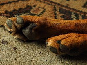 Kremacja psa – jak wygląda?