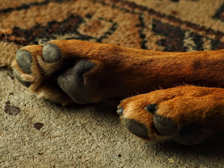 Kremacja psa - jak wygląda?